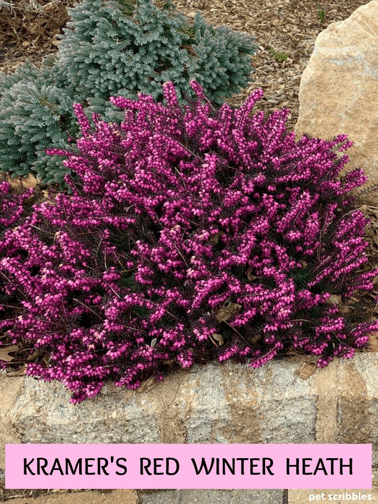 a37a7990eb6001059f8c7e396220f5c3 - Winter Flowering Shrubs For Small Gardens