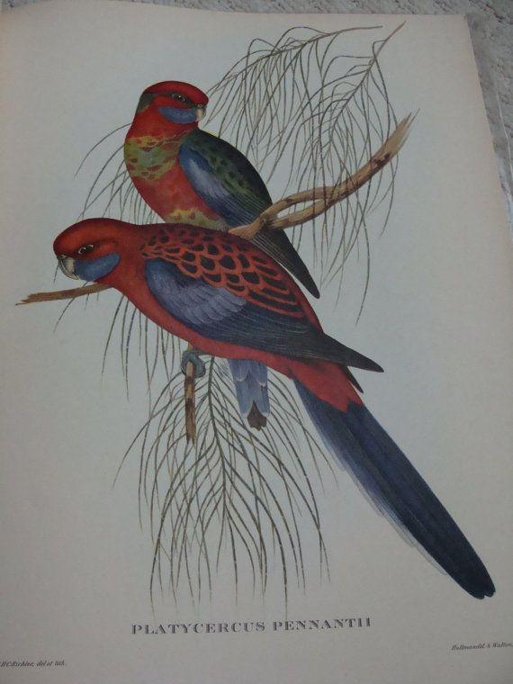 Vintage bird prints John Gould Birds 24 plates by JacquelineMcEwan, $200.00