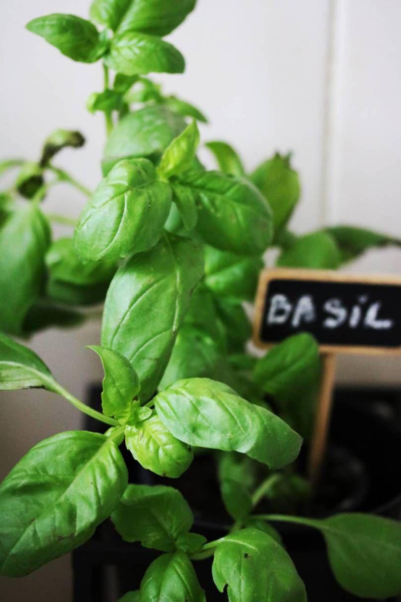 Faire Pousser Des Oignons En Pot jardiner et cultiver des herbes aromatiques : 8 conseils