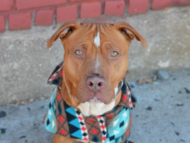 SONY A1057789 Animal shelter, Dogs up for adoption