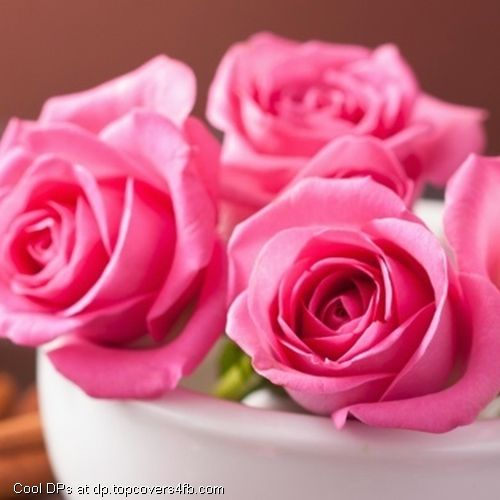 Pink Roses Flowers Petals Cool Display Pictures Flowers Dp Flowers Petals Flower Wallpaper