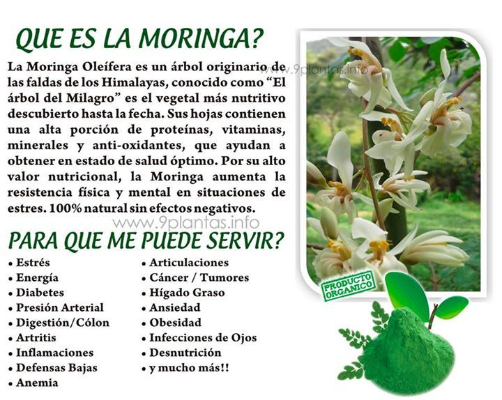 Que es la moringa es verdad que puede curar mas de 100 for Planta decorativa propiedades medicinales