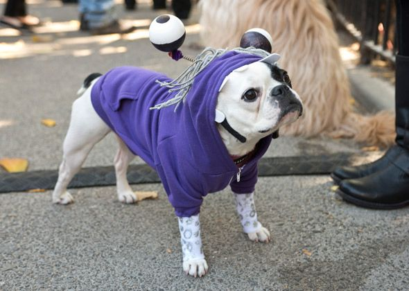 16 Amazing Costumes From The Tompkins Square Park Halloween Dog