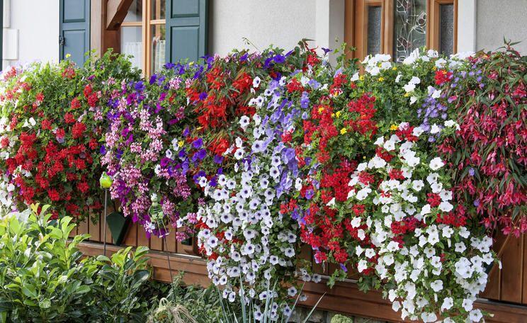 10 Tipps Fur Prachtige Balkonblumen Balkon Blumen