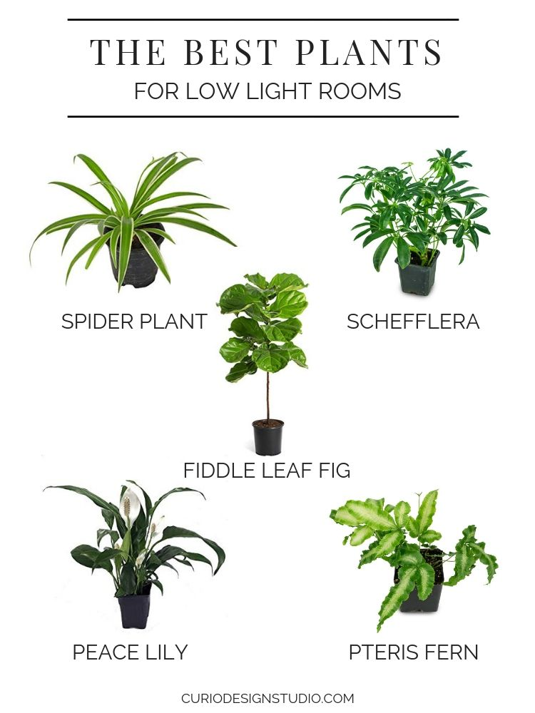 Flowerworks Collaboration Series The Best Plants For Low Light