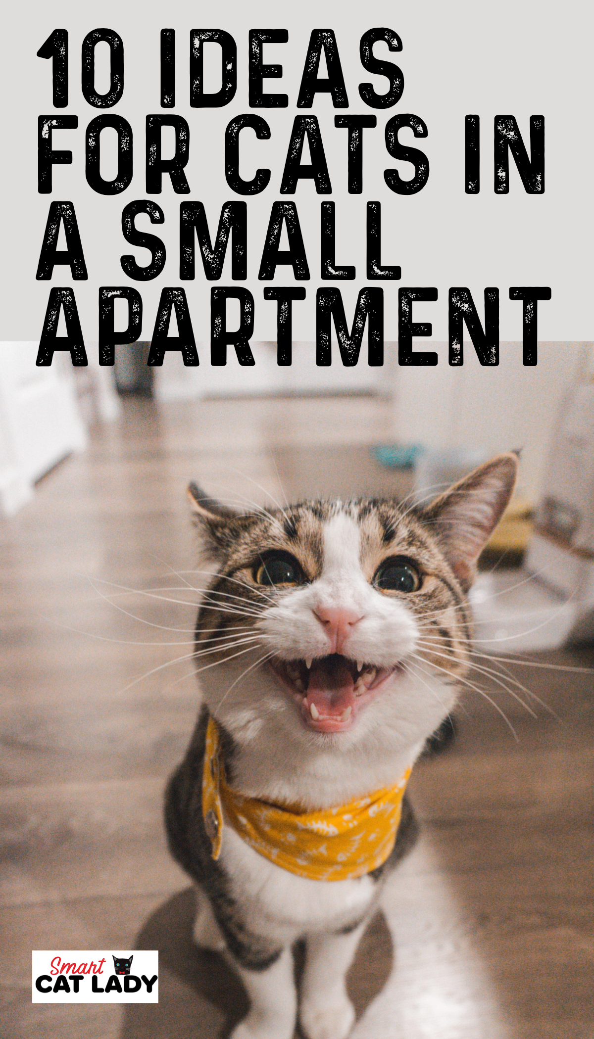 10 Ideas for Cats in a Small Apartment Cat diseases, Cat