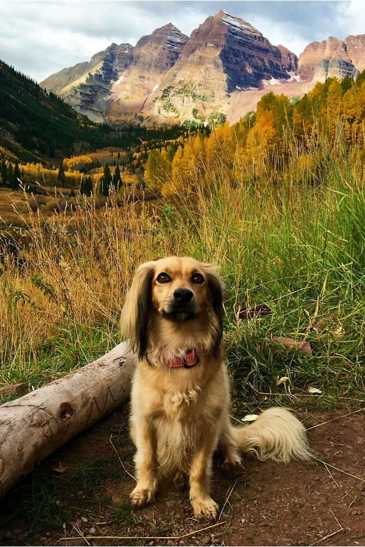 Dog Friendly Hiking Trails Aspen Colorado Maroonbells