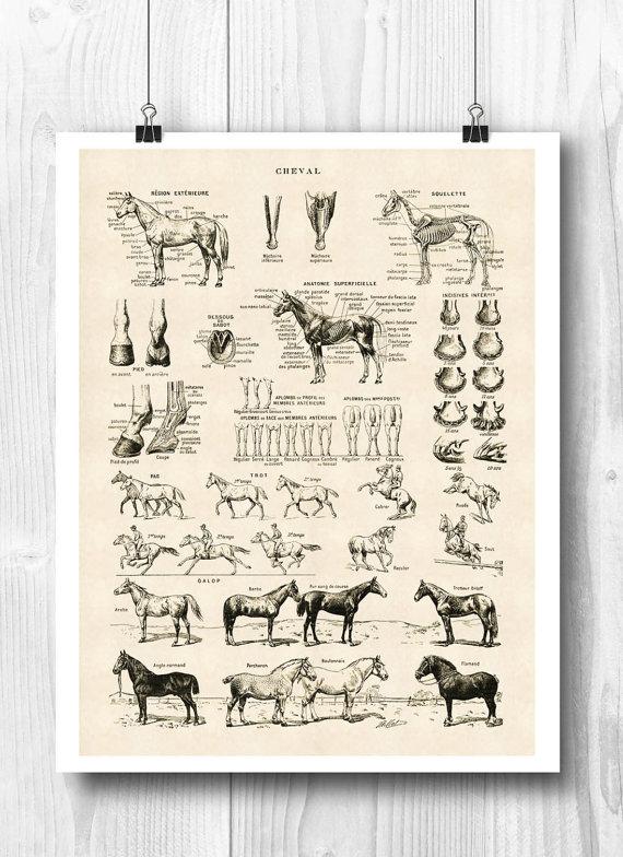 Printable Horse Art Horse Poster Horse Skeleton