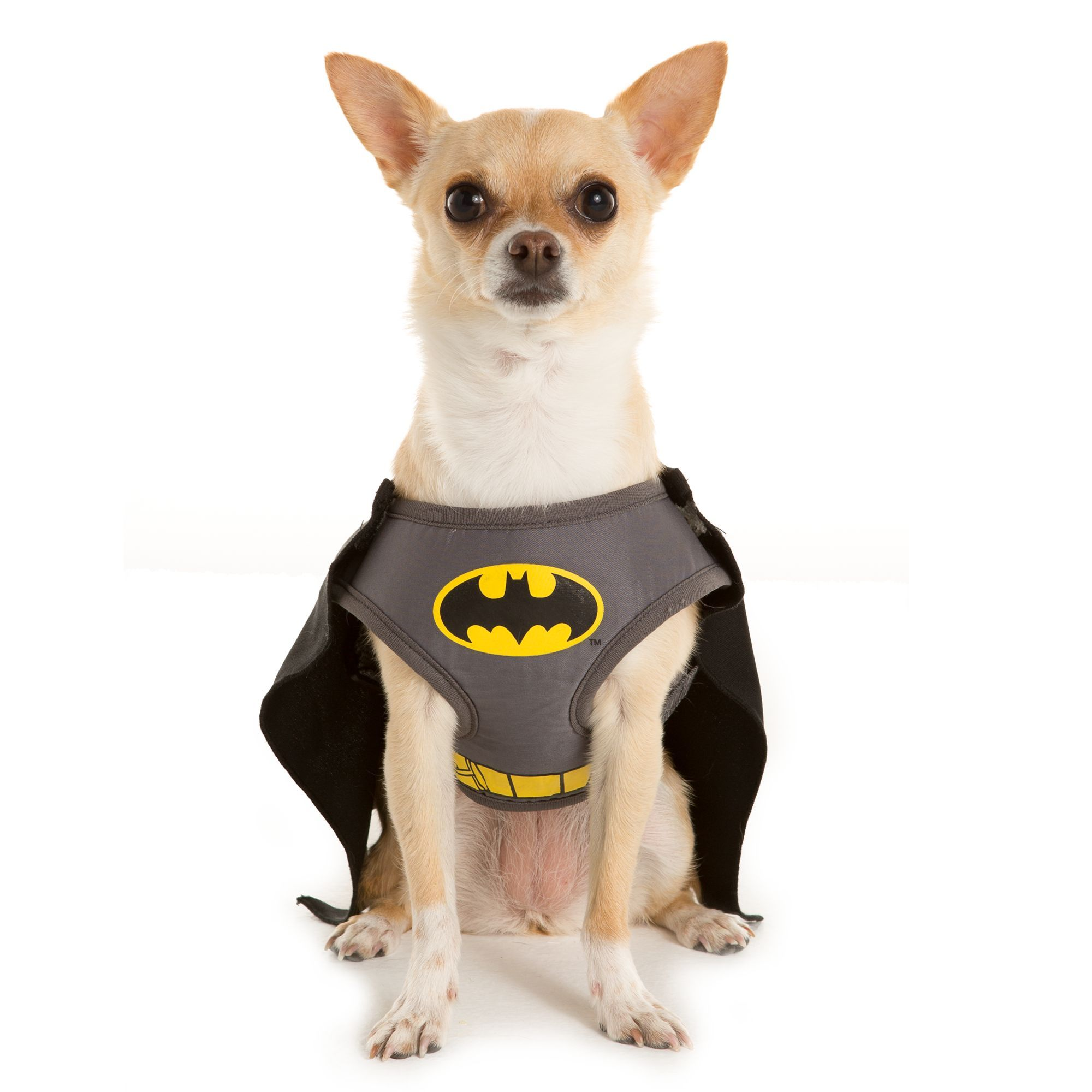 Dc Comics Pet Halloween Batman Harness Dog Harnesses Petsmart