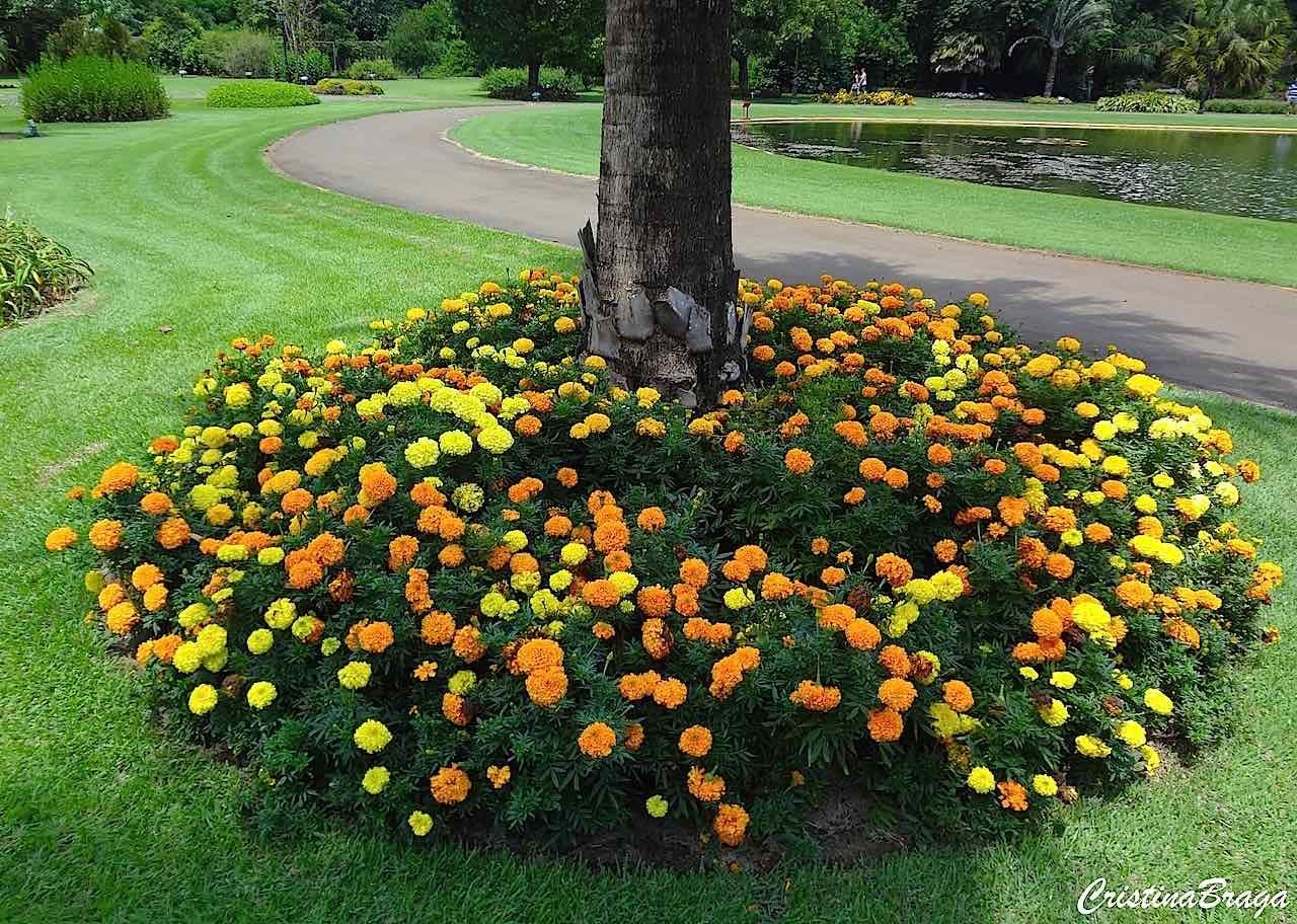 Plantas Para o Pé das Árvores trazem cor, textura e brilho para uma área com sombra. As plantas certas dão à área uma exuberante aparência natural, em ......