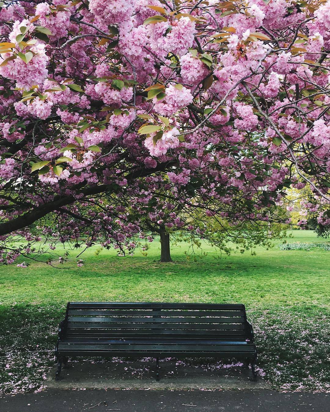 A month ago...the Cherry blossom alley in Greenwich. А