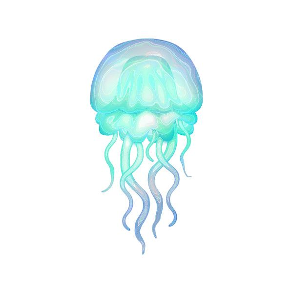 Element18 Png Liked On Polyvore Medusa Drawing Jellyfish Art