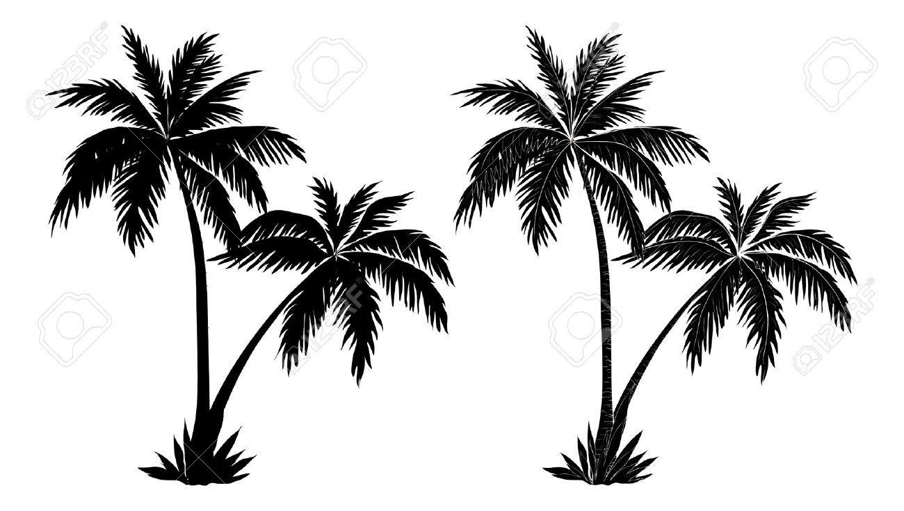Palmiers Tropicaux Des Silhouettes Noires Et Les Contours Contours Sur Fond Blanc Clip Art Libres De Droits Silhouette Palmier Silhouette Noire Dessin Arbre