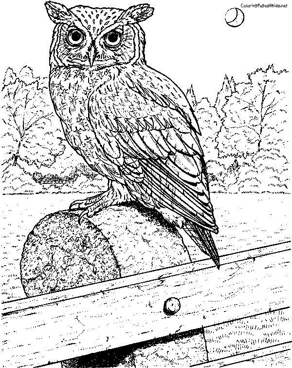 Pin By Darlene Cockerham On Animal Bird Patterns Owl Coloring