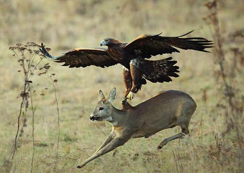 ÁVA SORYA Cracking foto...eagle
