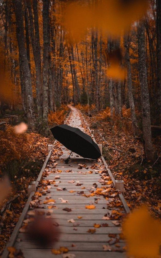 fall mood #autumnscenery