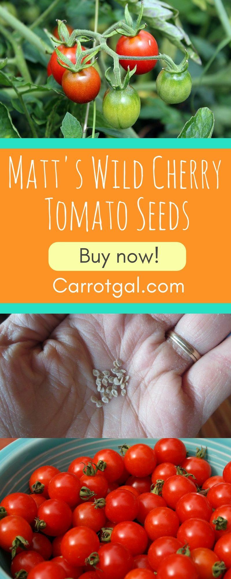 2 75 Per Packet Matt S Wild Cherry Tomato Seeds 25 Seeds Per