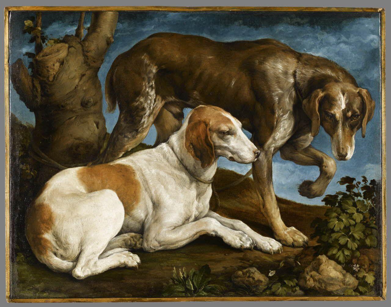 Deux chiens de chasse liés à une souche / Two hunting dogs ...