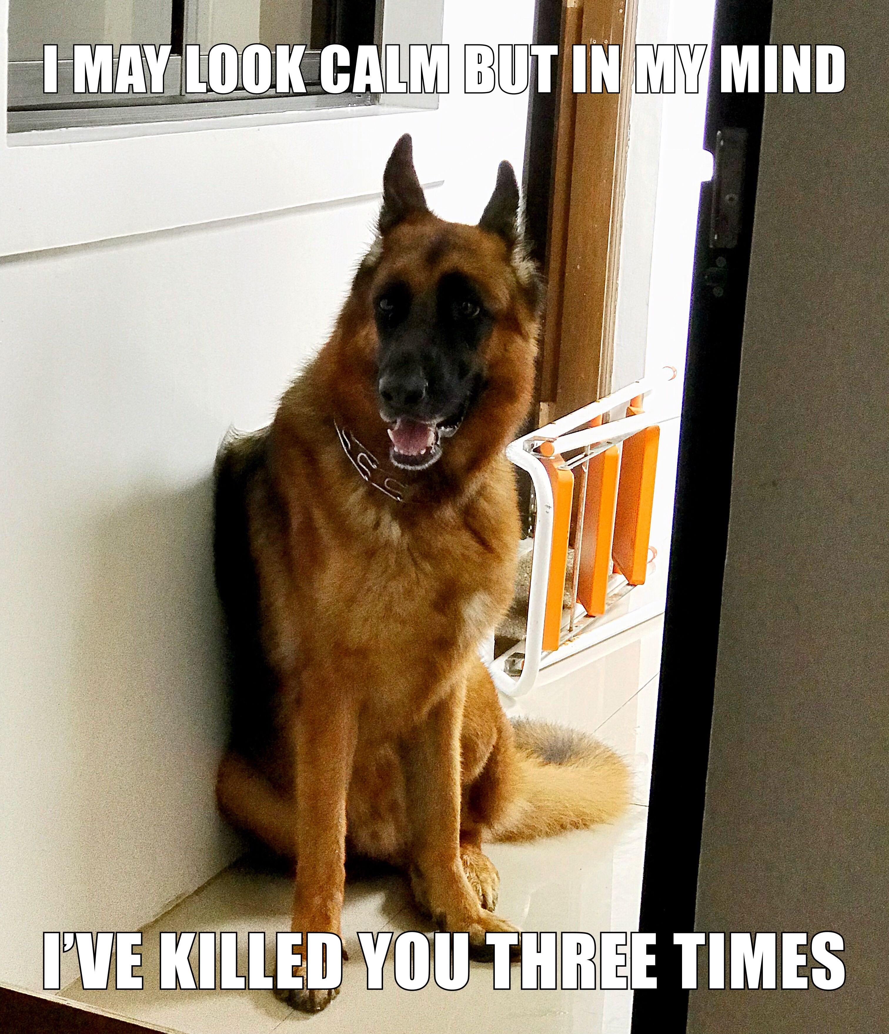 The German Shepherd Ares German Shepherd Memes German