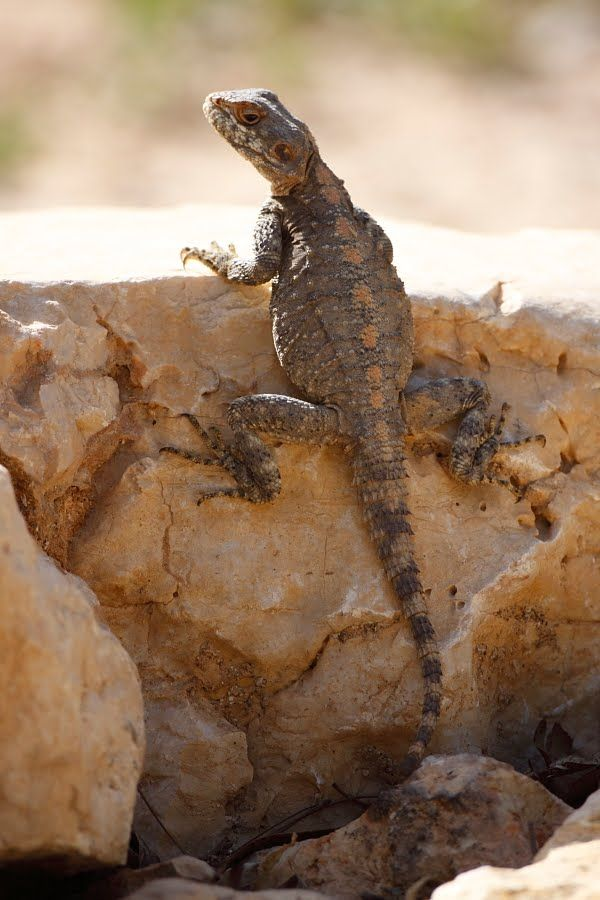 deserts animals and plants - photo #22