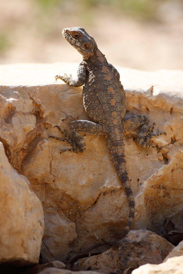 deserts animals and plants - photo #22