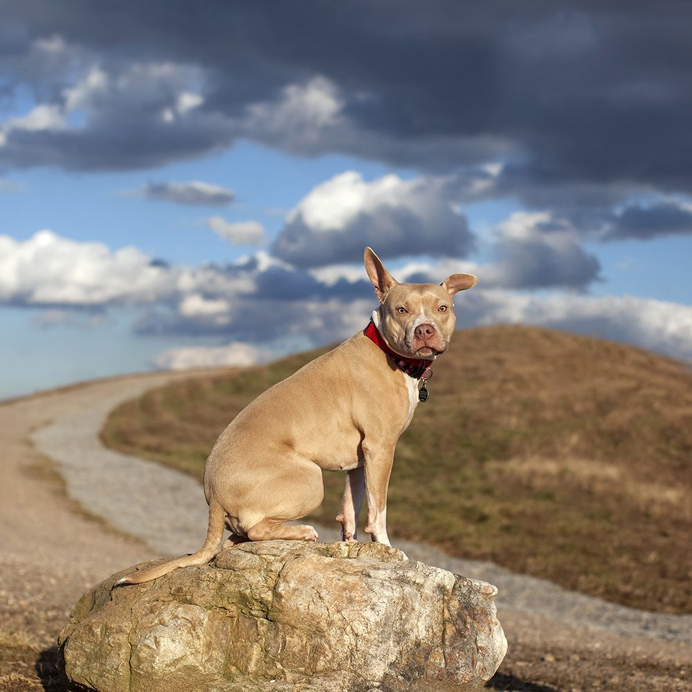 Pin By Elizabeth Reilly On Photographs I Love Dogs Animal Shelter Animals