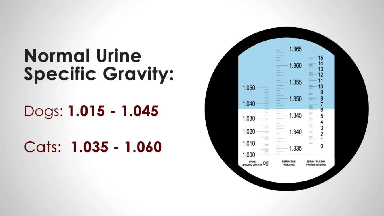 Normal Urine Specific Gravity | Animal Info /Care/Charts/Help/Vet