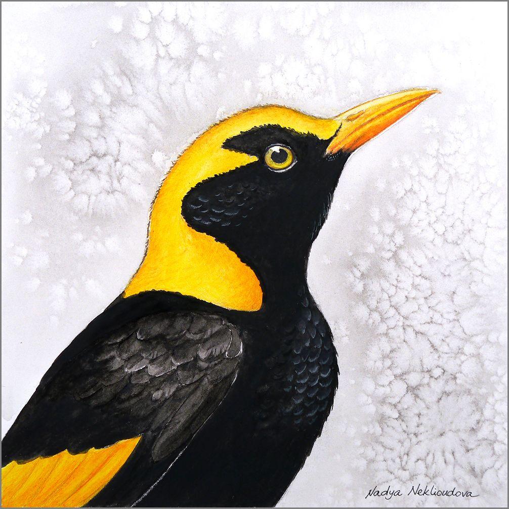 """Bright Hopes"" This brightlycoloured Regent Bowerbird"