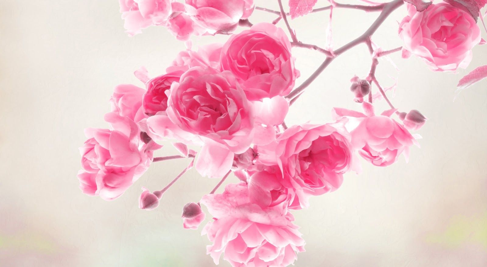 Pink flowers background 19325 1600x878 px hdwallsource pink pink flowers background 19325 1600x878 px hdwallsource dhlflorist Choice Image