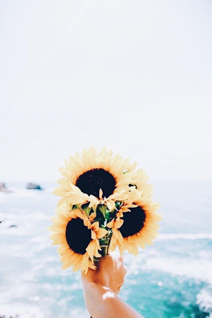 Pin By Malou Styver Elmstrom On Flowers Sunflower Wallpaper Art Wallpaper Aesthetic Iphone Wallpaper
