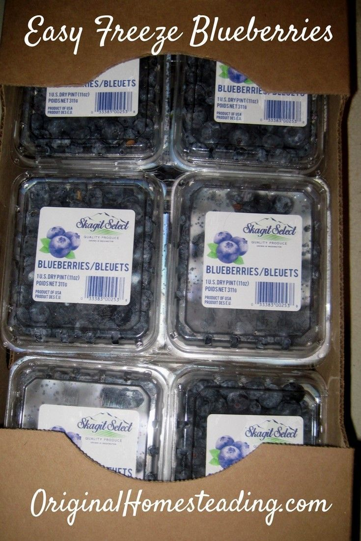 Freezing blueberries the easy way frozen blueberries