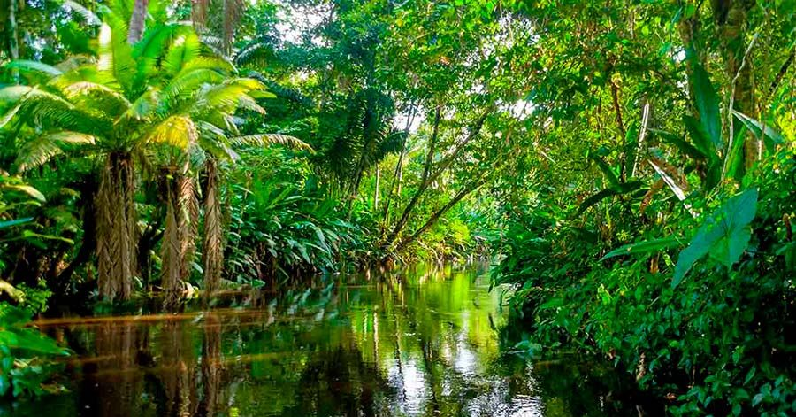 selva amazonas Buscar con Google Selva amazonica
