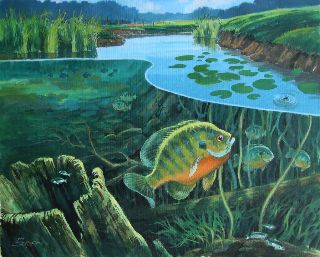 Freshwater fish art - Think J Would Let Me Buy This And Hang It In The Living Room