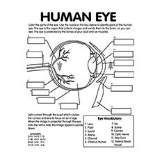 Anatomy Coloring Pages The Eye