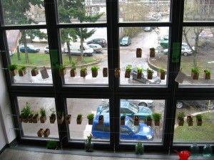 window garden in Tallinn