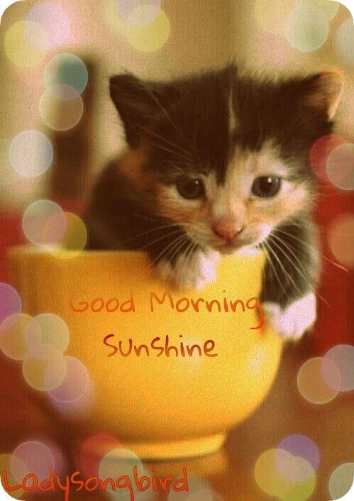 Good Morning Sunshine Teacup Cats Teacup Kitten Cute Animals