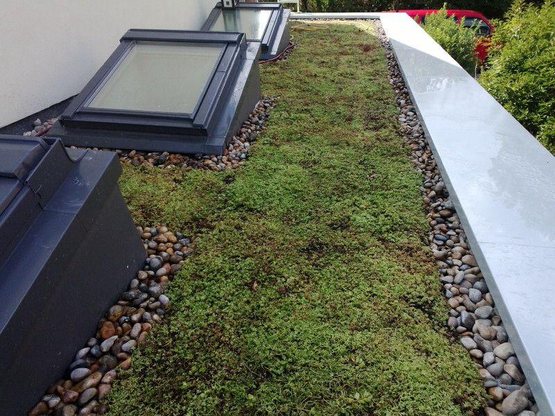 Sedum Roof With Skylight Roof Skylight Sedum Roof Roof
