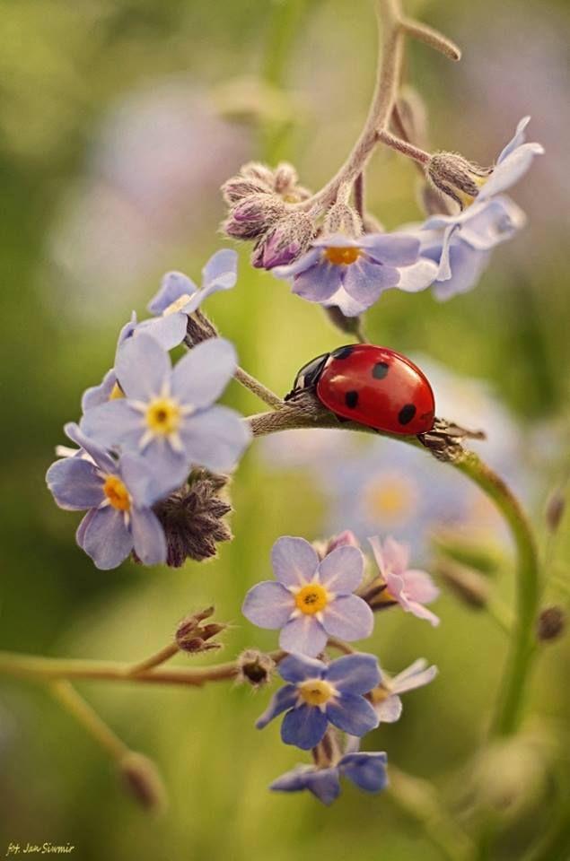 Природа в фотографиях Jan Siwmir | Фотографии природы ...