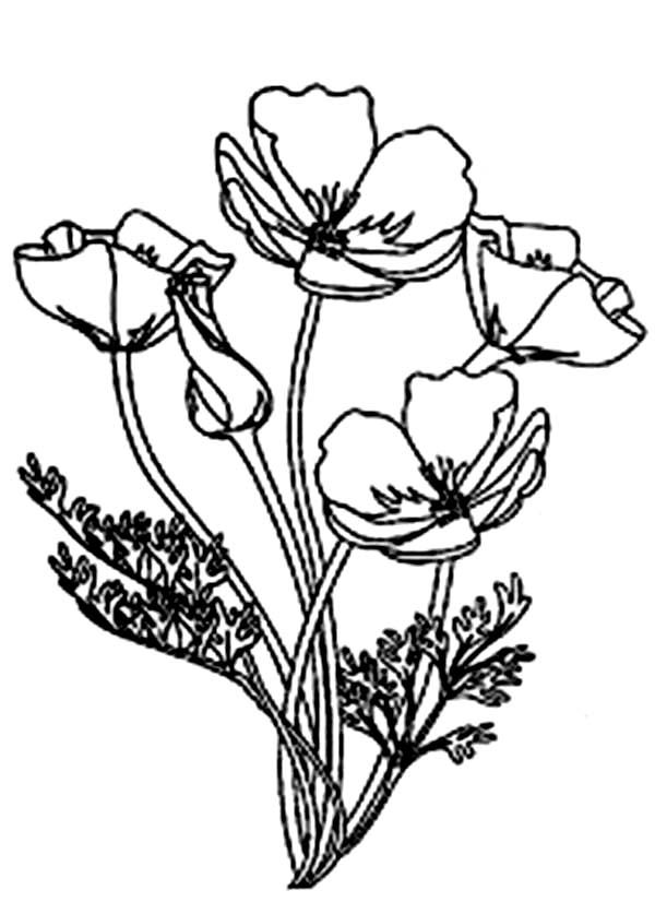 Picture Of Blooming California Poppy Coloring Page Poppy Flower Drawing Poppy Coloring Page Flower Line Drawings