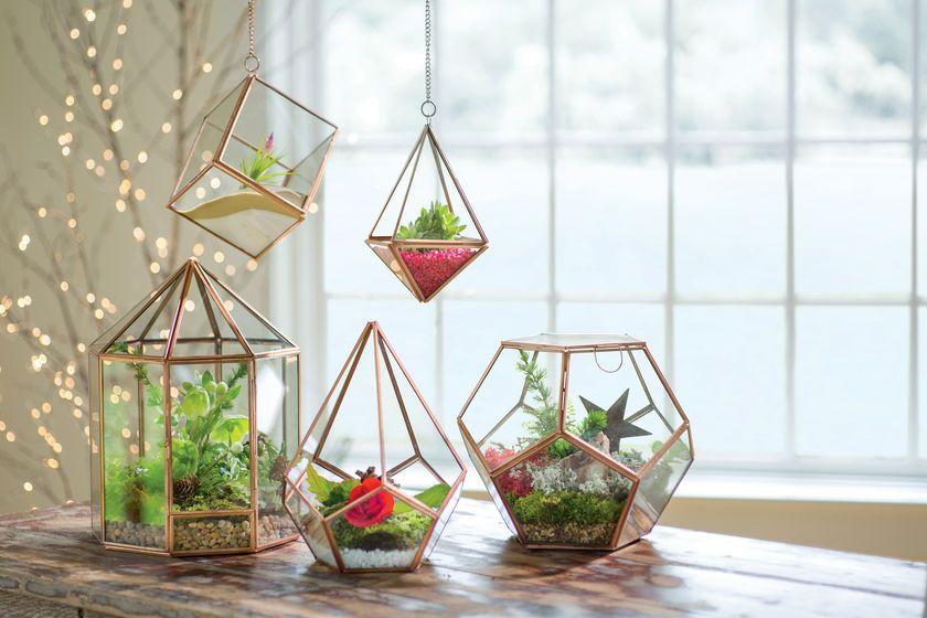 Prism Hanging Terrarium   Glass Terrarium   Plant Terrarium