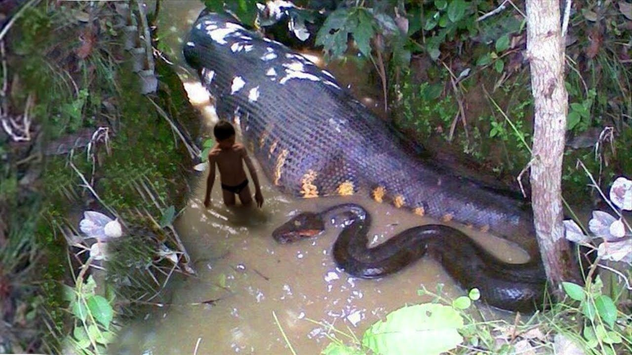 Top 5 Biggest Snakes In The World World Biggest Snake Deadly