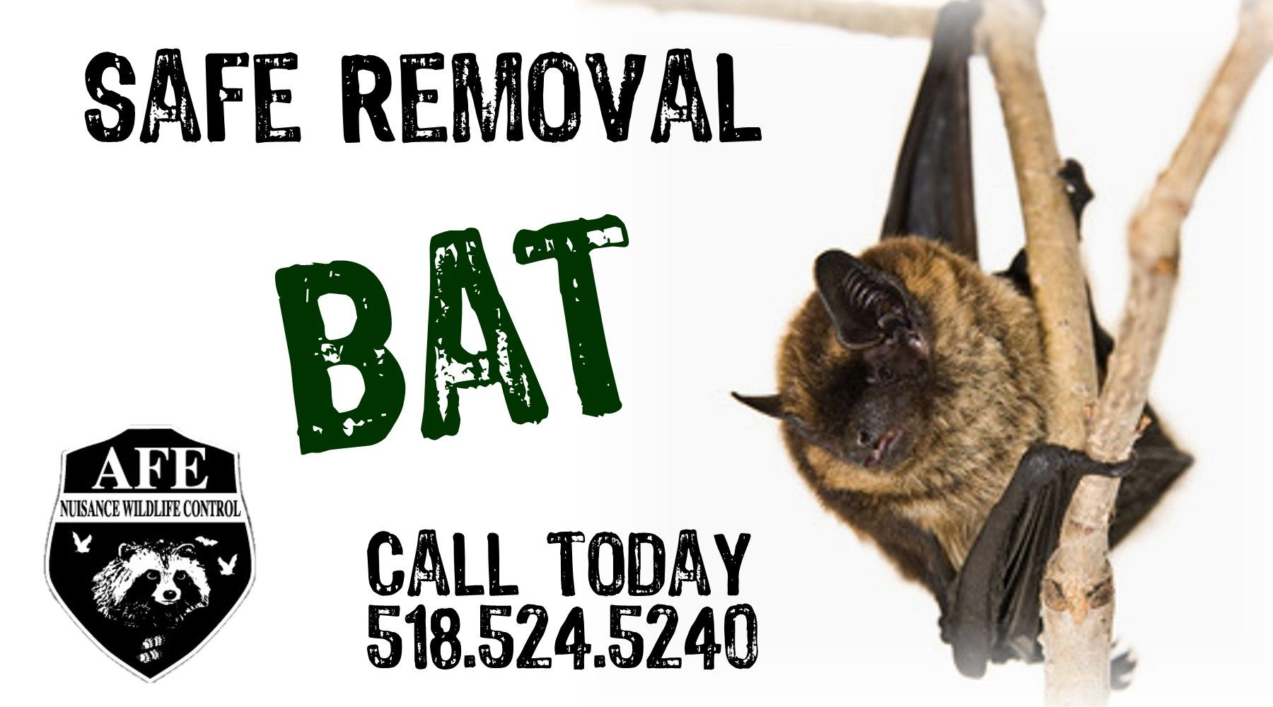We provide Safe and Reliable wild Bat removal from your
