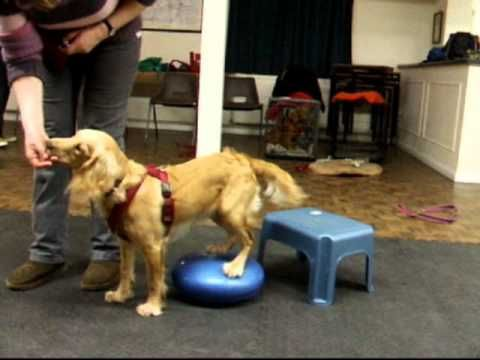 Puppy Foundation Agility 7 Months Youtube Training Your