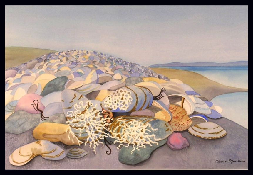 Adrienne ElfnerHazen, Shells at Petit Rocher
