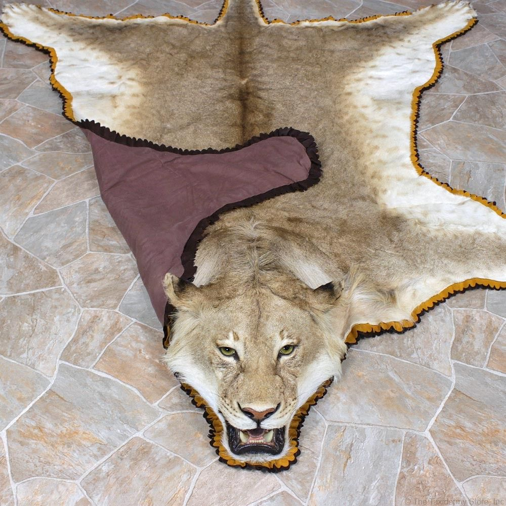 African-lion-rug-taxidermy-mount-a6-_12331-for-sale-_-the