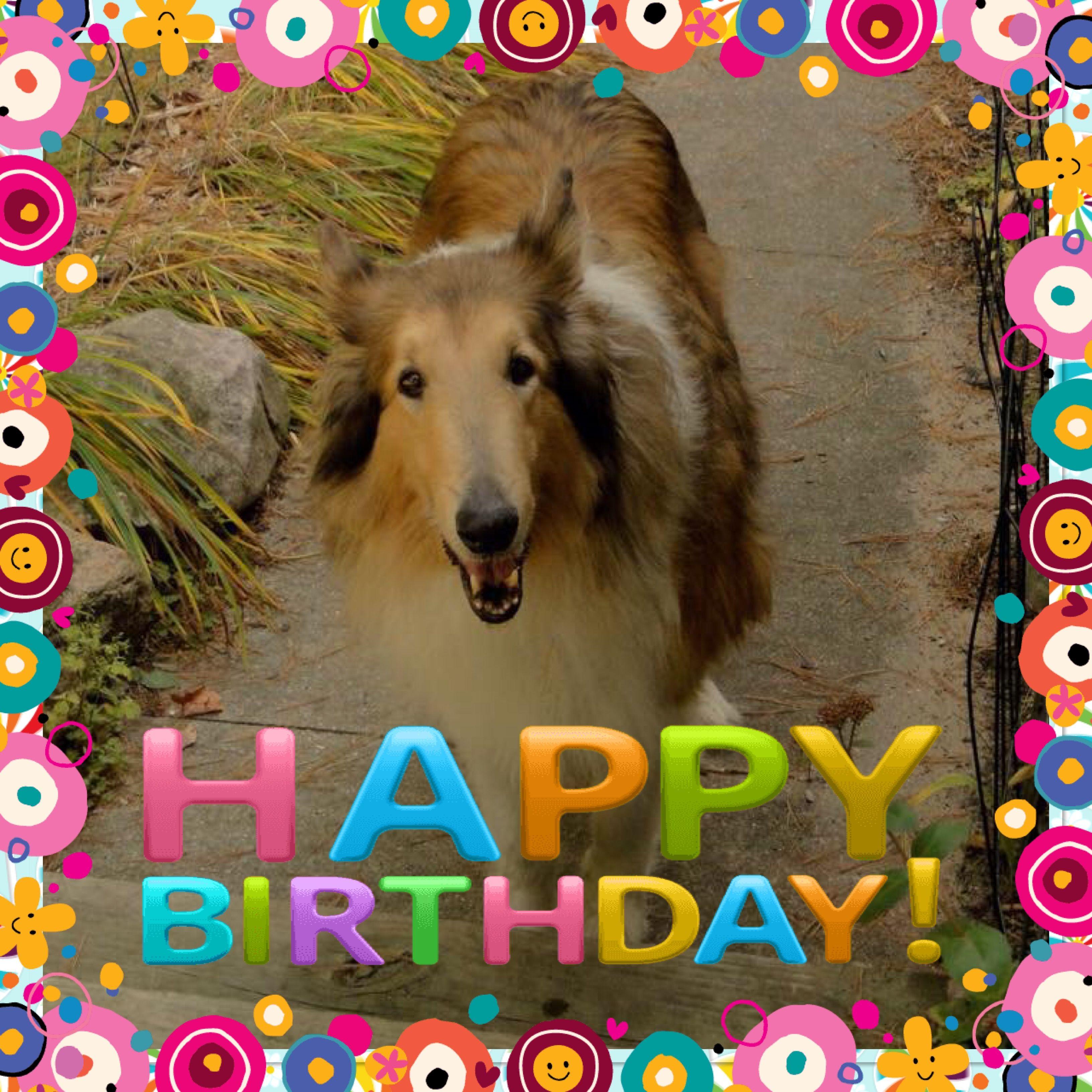 happy birthday dog | happy birthday memes | Pinterest ... - photo#9