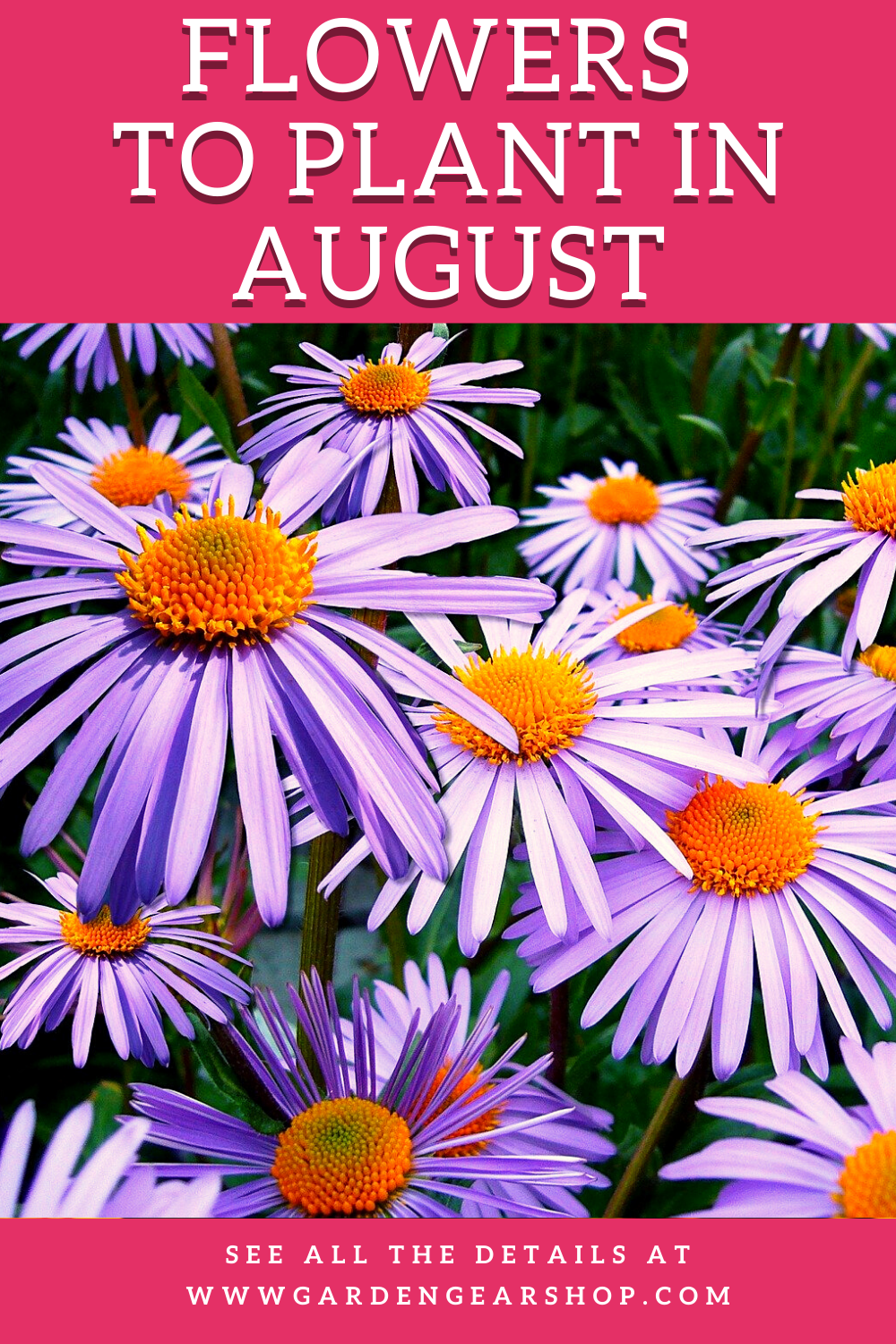 Flowers To Plant In August In 2020 Plants Planting Flowers August Flowers