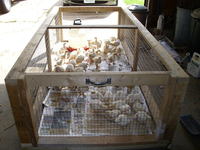 Backyard Brooder Box 28 Images 100 Broilers And