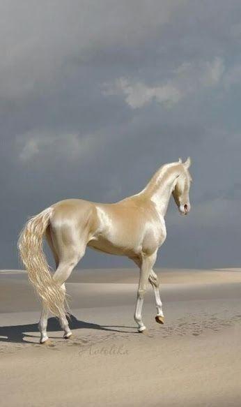 goldenes pferd  hayvan in 2020  schöne pferde tiere