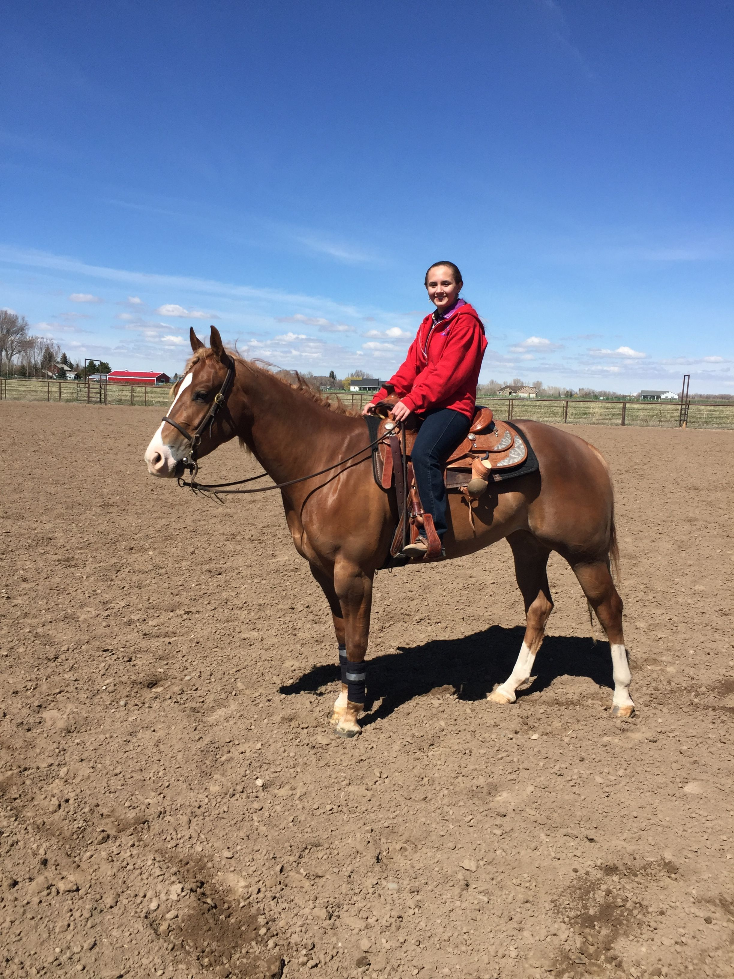 Riding My New Horse Julep Horses Horse Life Animals